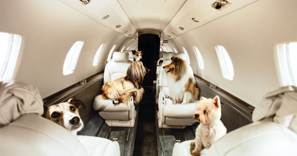 Pets and private jets